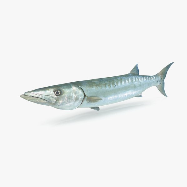 barracuda 3D model