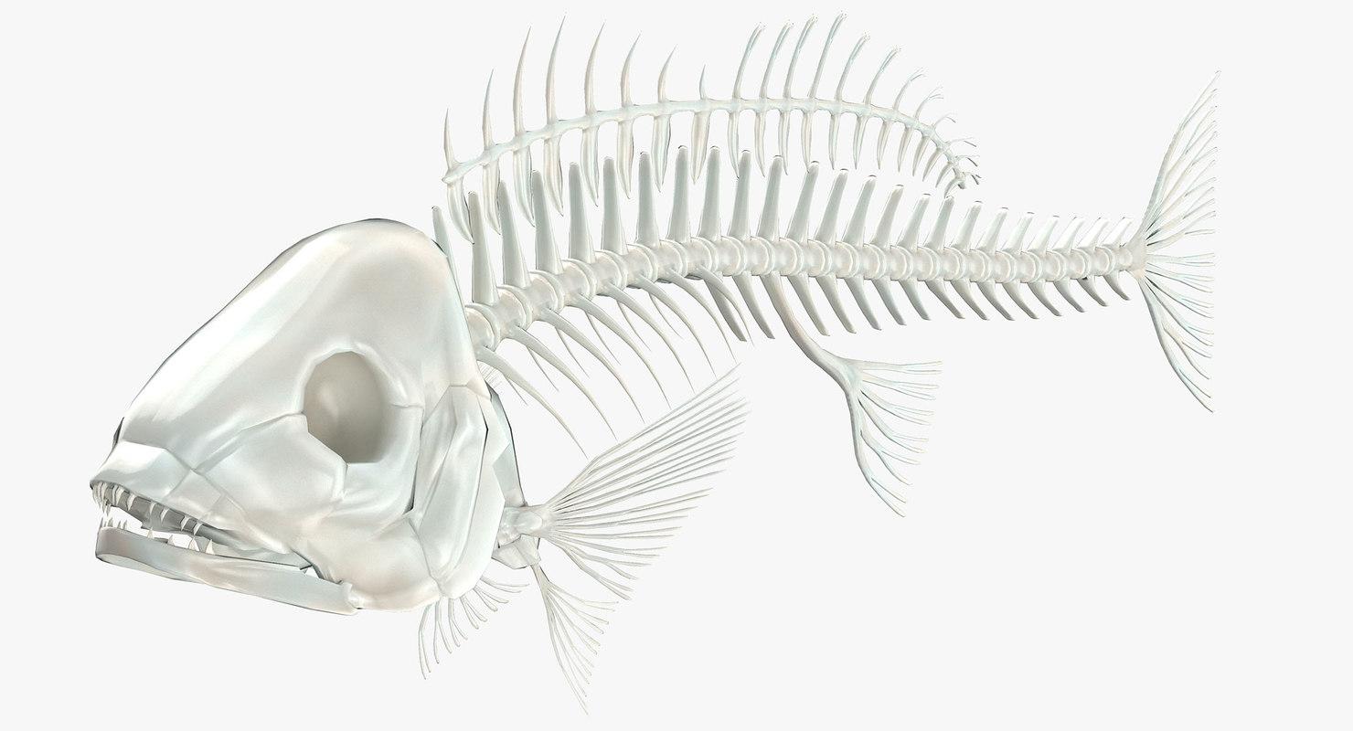 maya fish skeleton