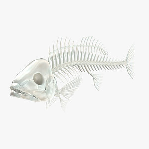 maya fish skeleton