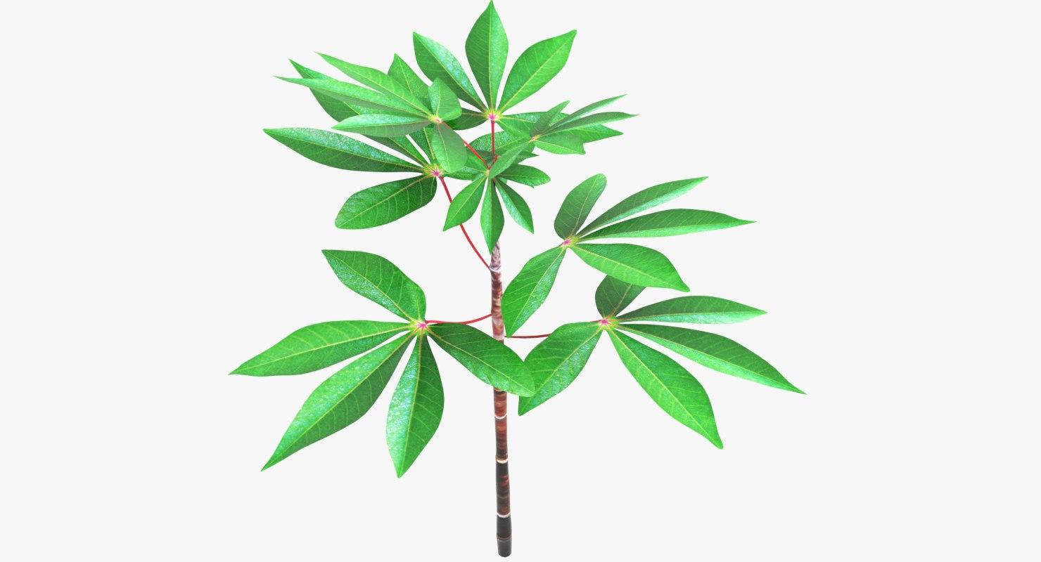3D plant cassava small