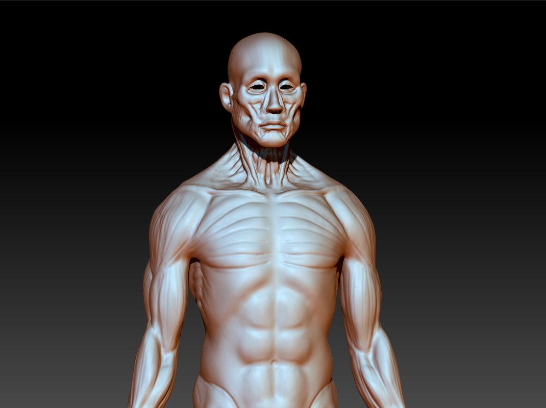 anatomy muscles 3d model
