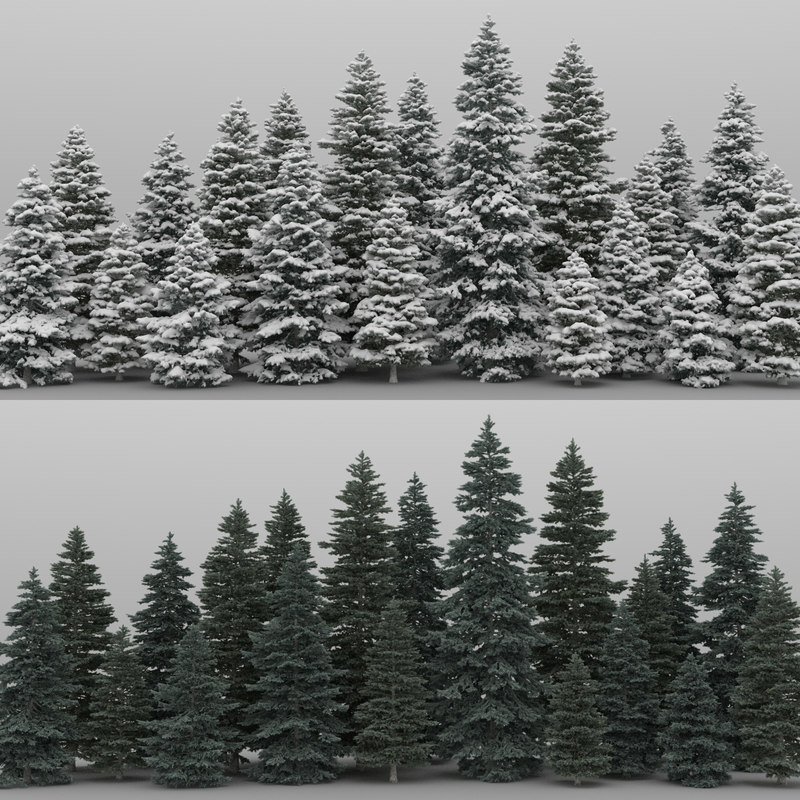 3d 20 spruce trees