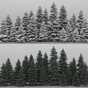 20+20 spruce Trees