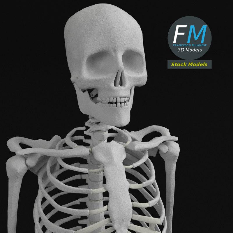complete human bones model