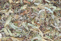 Dried Linden Leaves Tea Texture 1