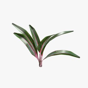 indoor plant 3D model