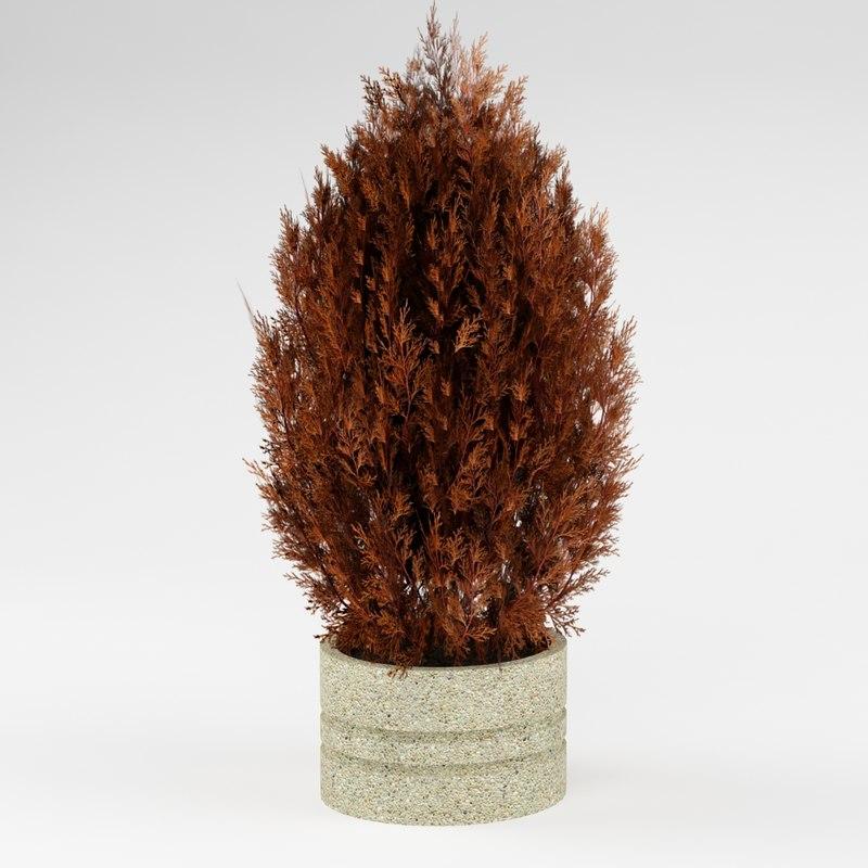 3d fir tree bush