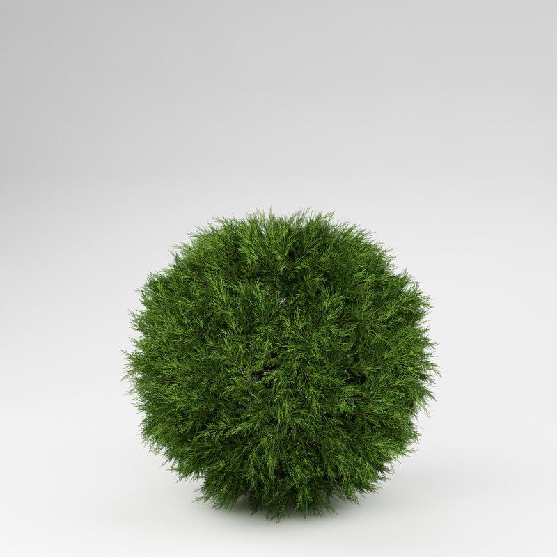 bush 3d model