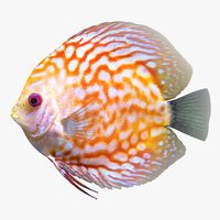 3D discus fish 2 scanline model