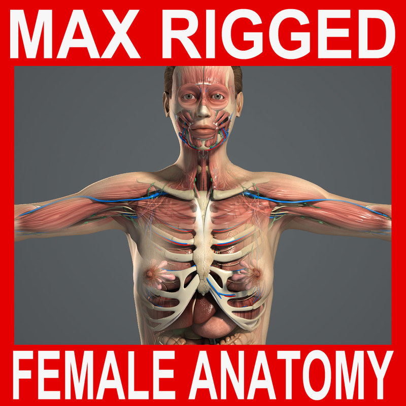 3d model rigged complete female anatomy