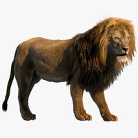 Lion (Rigged) (Fur)