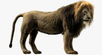 3D lion rigged fur model