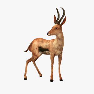 buck springbok impala 3d model