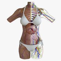 african american female torso 3d model