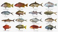 Saltwater fish collection 1