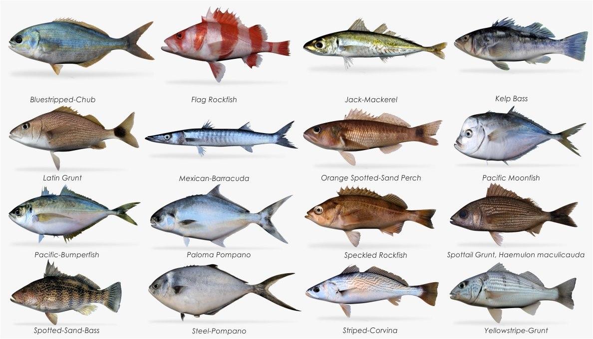 3d model saltwater fish