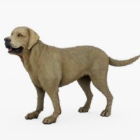 rigged labrador retriever 3D model