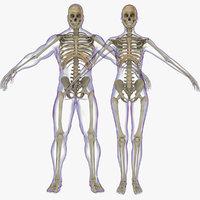 ma skeleton rigged combo