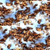 Snow on Leafy ground 03