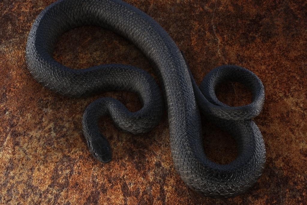 3d model black snake