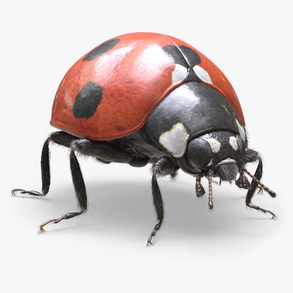 3D ladybug real realistic