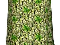 Mossy tree bark 05