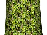Mossy tree bark 04