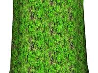 Mossy tree bark 11