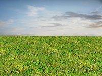 Mossy ground 06