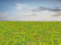 Mossy ground 03