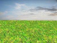 Mossy ground 08
