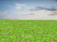Mossy ground 02