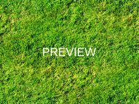 Mossy ground 01