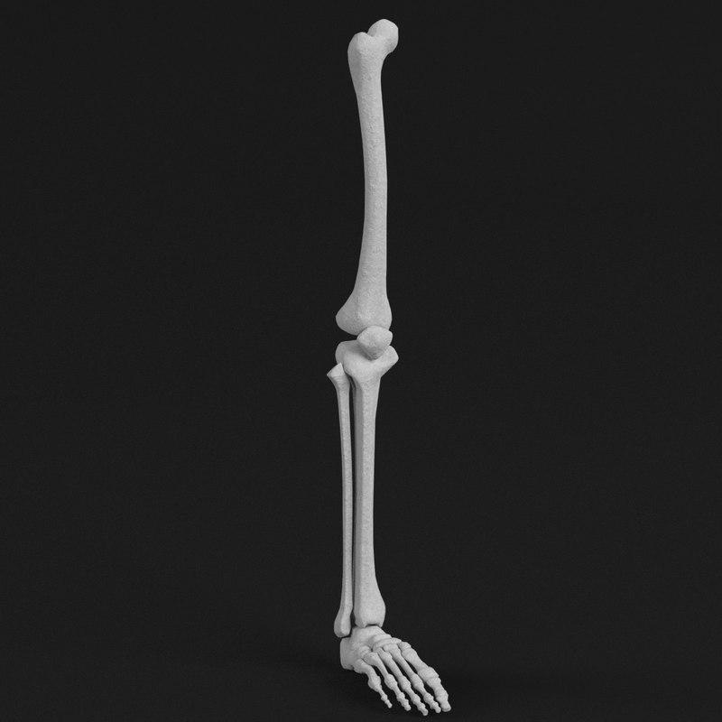 Human leg foot bones 3D model - TurboSquid 1176968