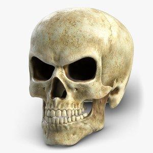 3d skull 3 model