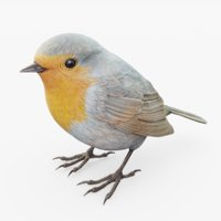 animal robin 3D model