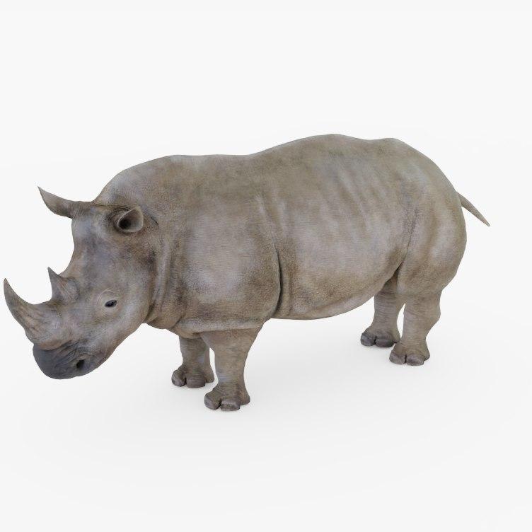 3D animal rhino model