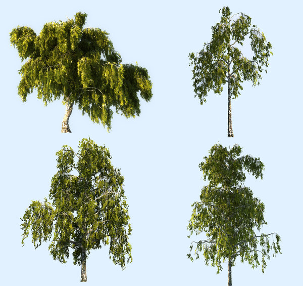 3D birch-tree pack 4 tree