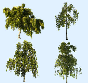 3D birch-tree pack 4 tree