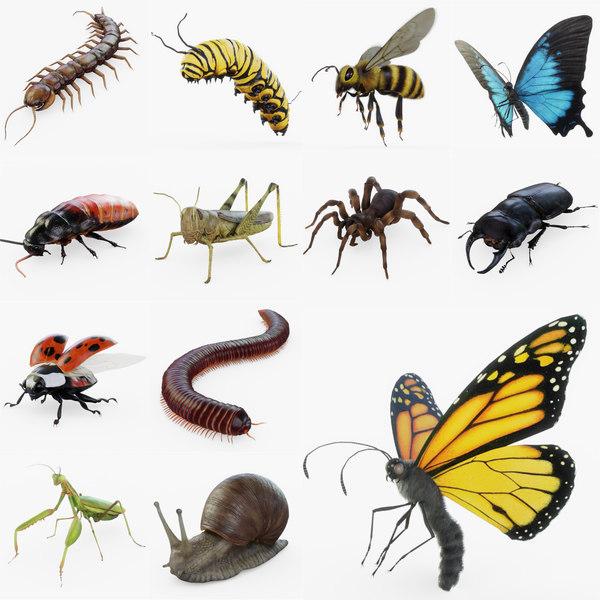 bug pack mantis 3D model