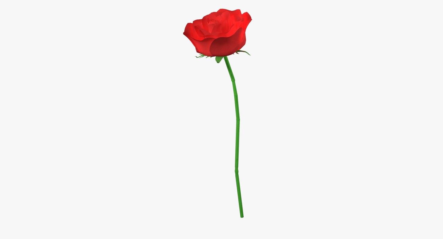 3D red rose flower veins