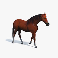 3D realistic brown horse rigged