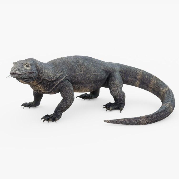 komodo dragon model