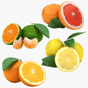 3D model citrus fruit set