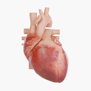 3D human heart versions