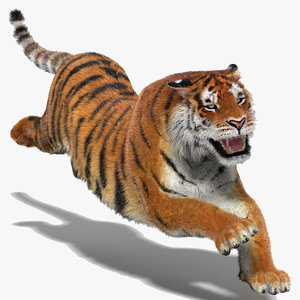 amur tiger fur cat 3d model