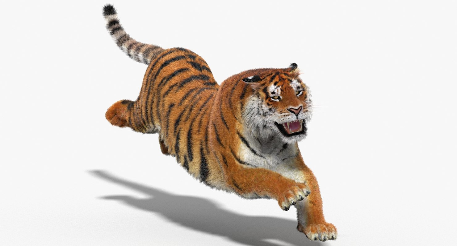amur tiger fur cat 3d model