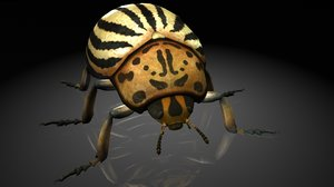 colorado beetles insects 3D