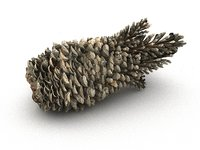 3D mega conifer cone