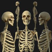 3D skeleton skelet